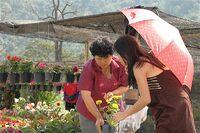 Des fleurs pour la maison