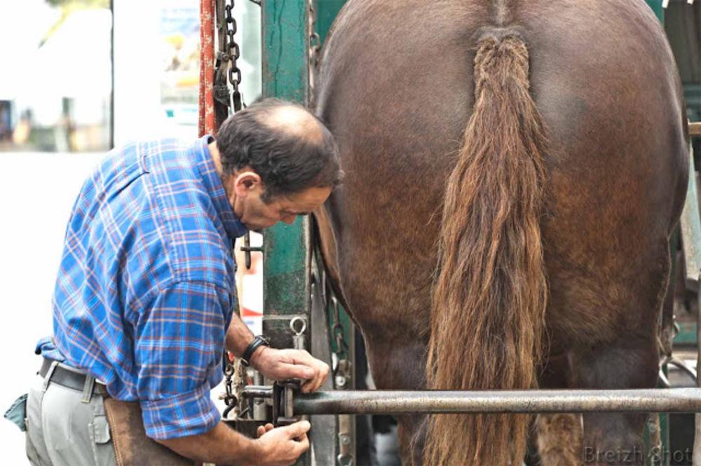 Métier maréchal-ferrant ambulant - Le cheval est introduit dans une cage de contention