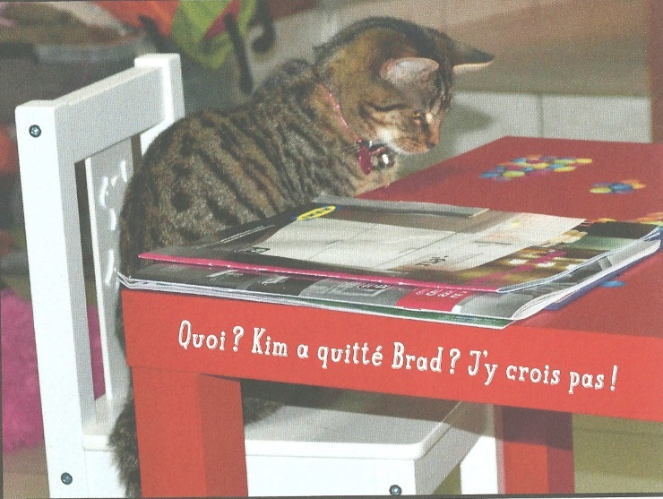 Chat continue....