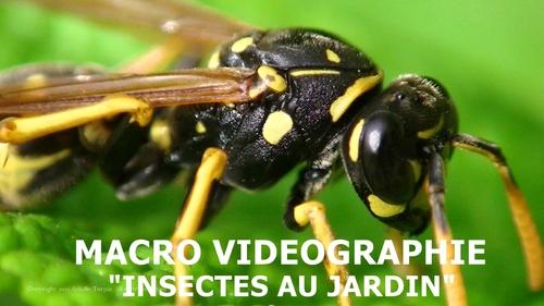 Macro vidéographie : Insectes au jardin