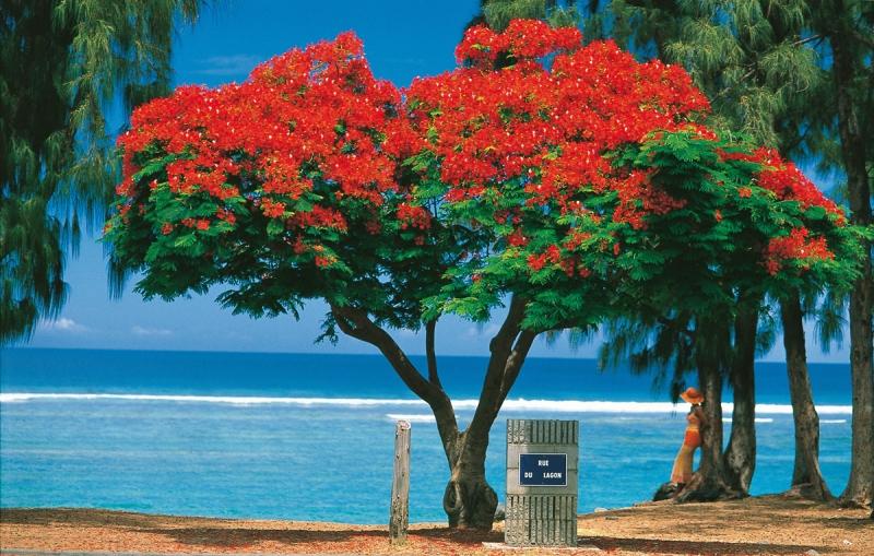 12/12/19 : Fête du 20/12 - Noël à la Réunion - Letchis - Histoire et chant