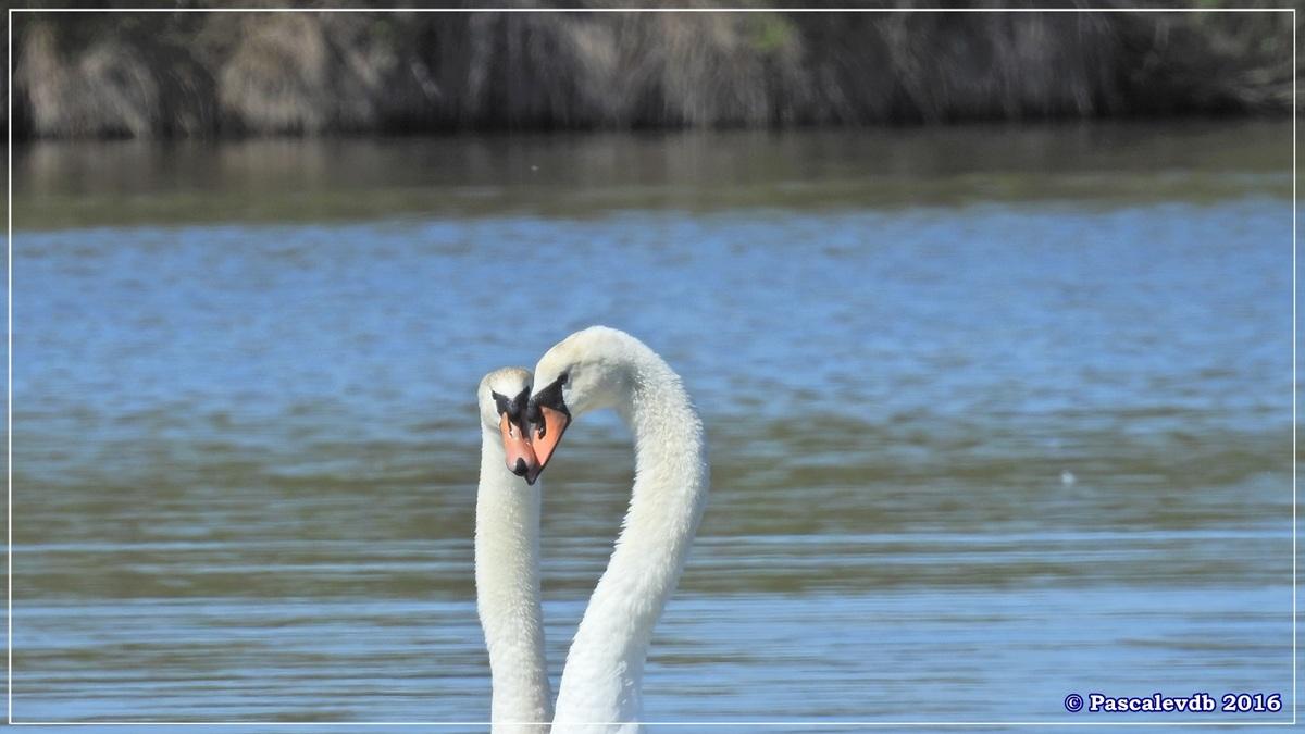Printemps à la Réserve ornitho du Teich - Avril 2016 - 6/12