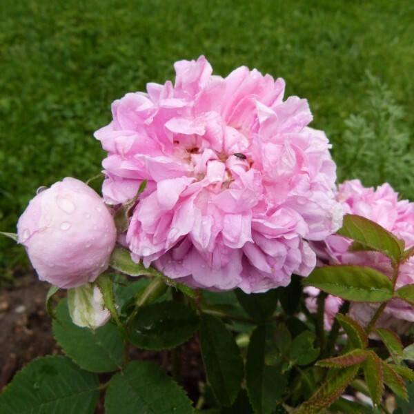 rosier-soupert-et-notting---juin-2014.jpg