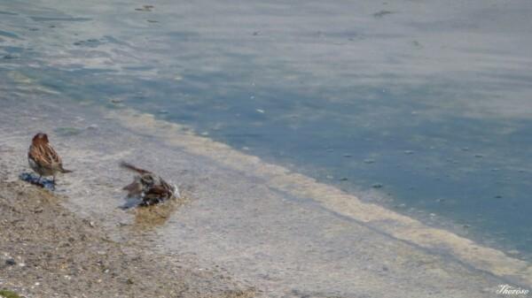 Yvoire, faune et flore lac léman (4)