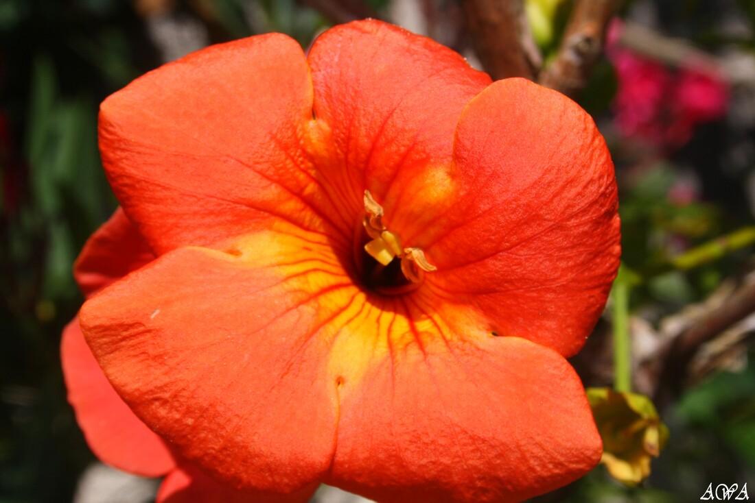 De belles fleur à Lacanau, fin aout.