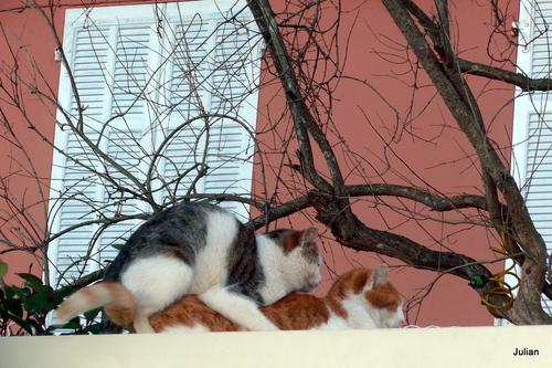 Un chat et une chatte ...
