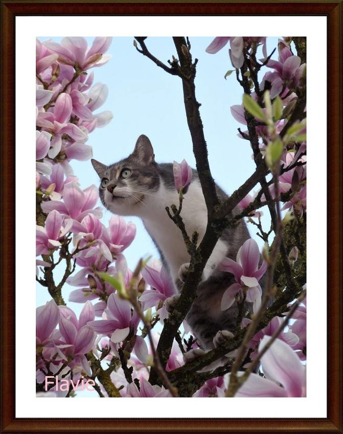 Miky dans le magnolia