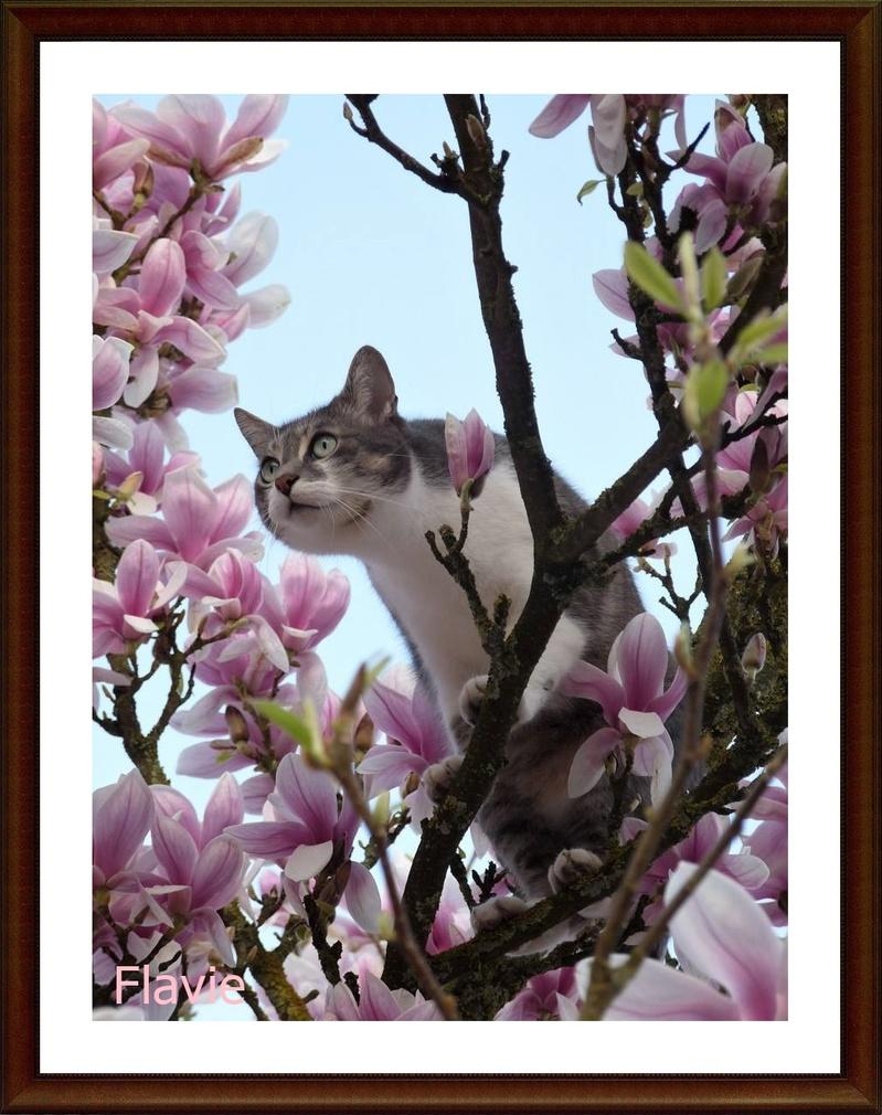 Miky sur le magnolia