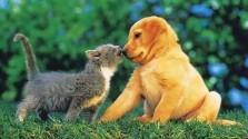chien chat[1]-copie-1