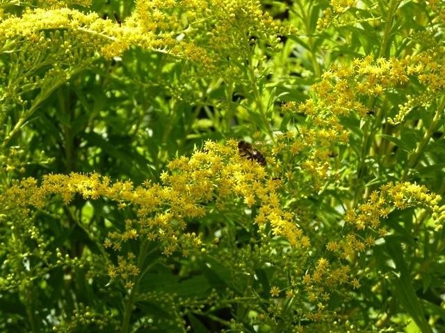 Jardins fruitiers de Laquenxy 11 mp1357 1 2010