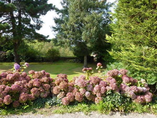 Locronan (Hortensias)