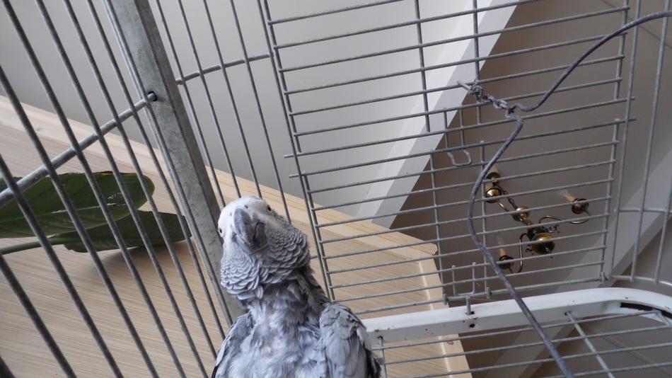 Mon voisin Coco !!!