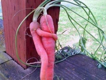 carottessaiment