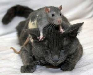 chat-et-souris-j.jpg
