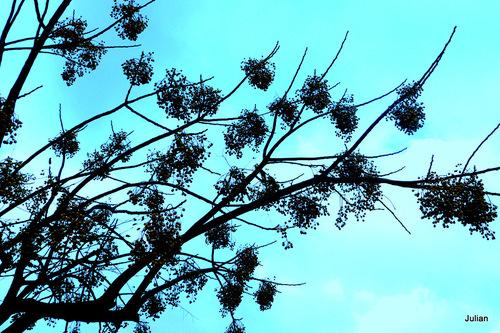 Arbre, branches, et ciel !