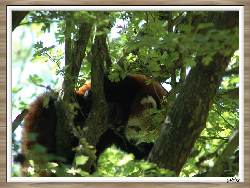 Zoo de Douai la Fontaine serie 1