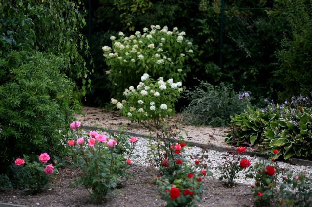 Une roseraie ? Non, un jardin de roses !