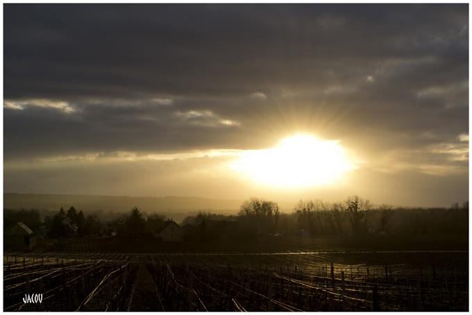 - Coucher de soleil sur la vigne