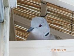 Notre nid 26