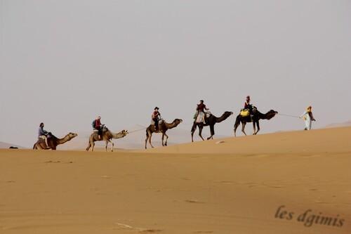 Attention chameau