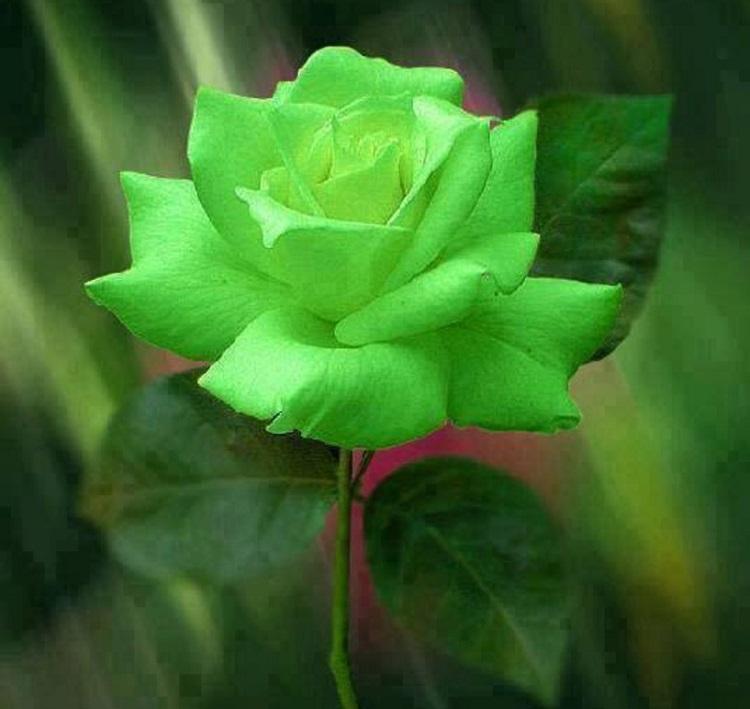 La reine des fleurs