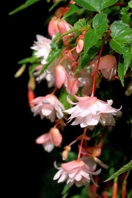 Give me five : longues floraisons