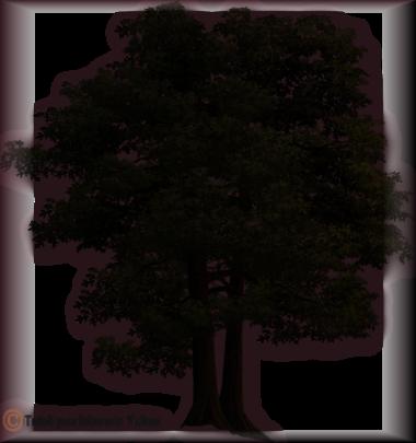 Tube silhouette 2916