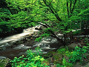 Tremont, Great Smoky Mountains National Park, Te