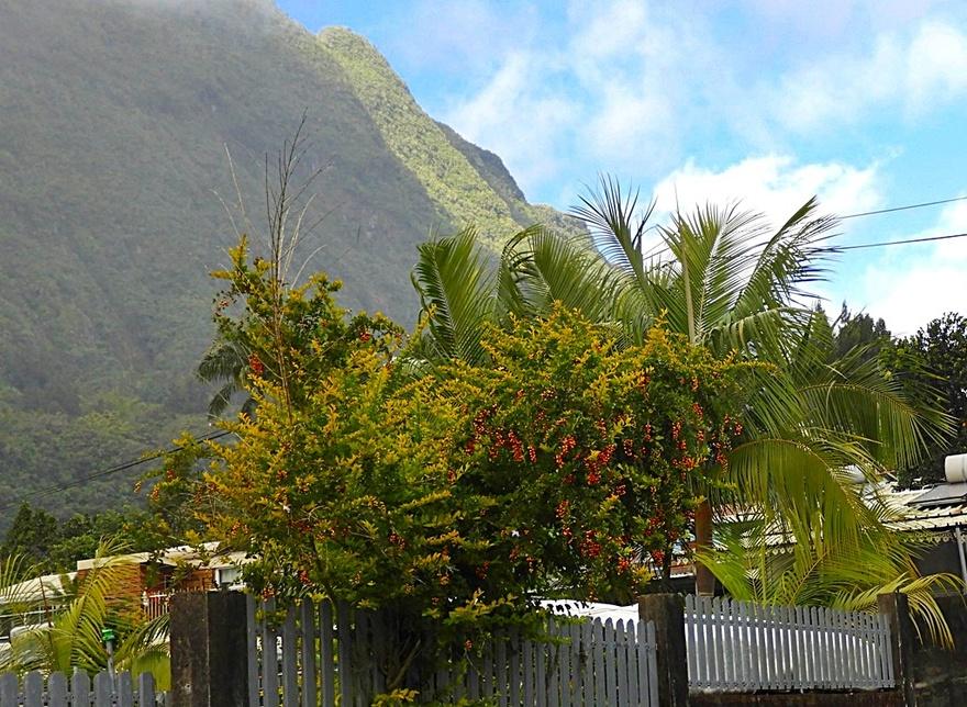 10/1/19 : Salazie à la Réunion (Fin)...