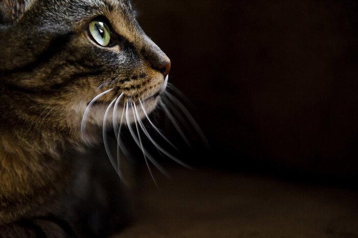 . Chantal Levesque Photographe animalière