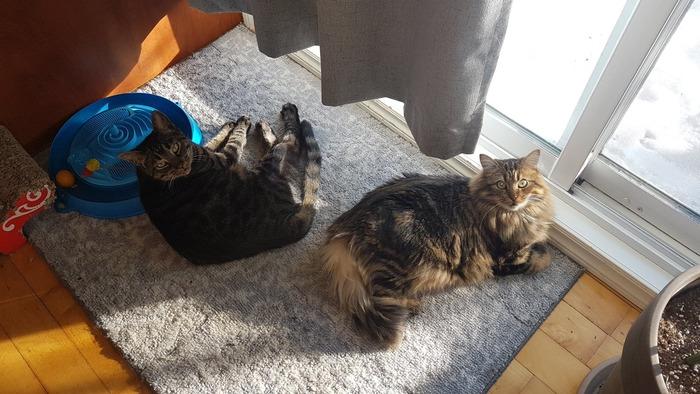 Les chats de mon fils