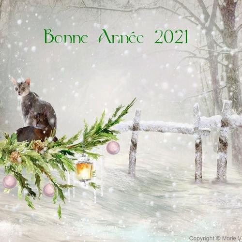 Bonne Année 2021 :