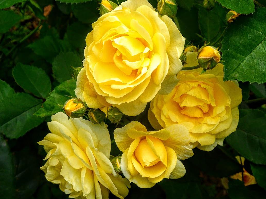 Андалусия цветы