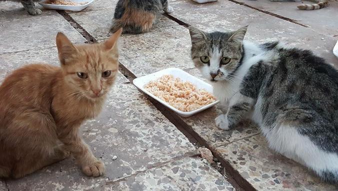 CHANTOUVIVELAVIE : Syrie : il défie les bombes pour sauver les chats d'Alep
