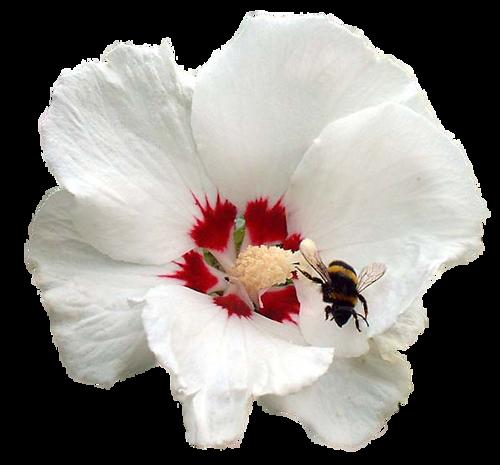 Une fleur / 2