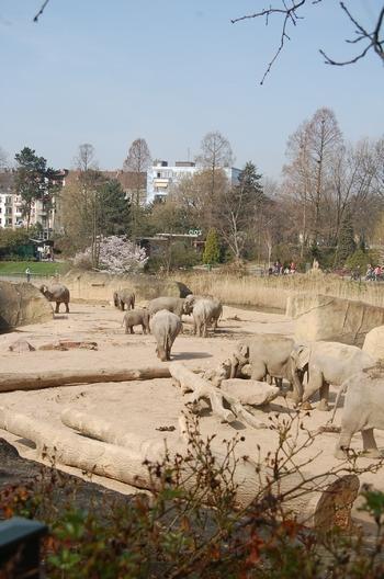 zoo cologne d50 2012 137