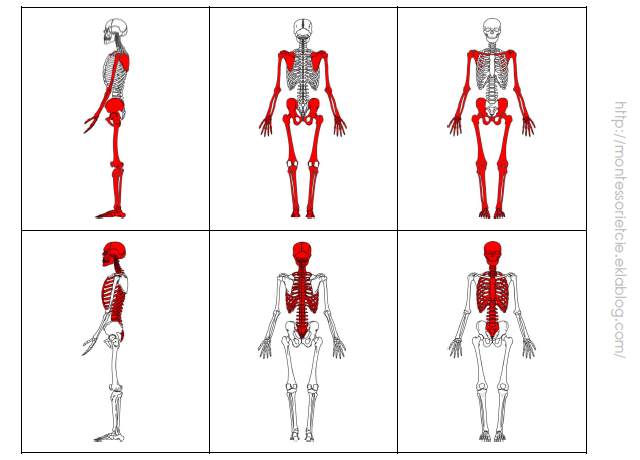 nomenclatures du squelette  simples et plus complexes