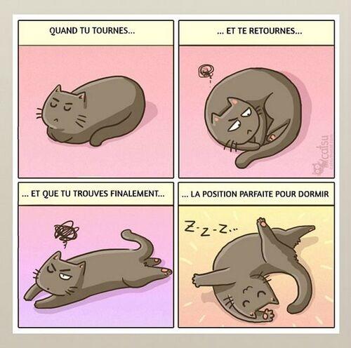 Histoire de chats (j'adore)