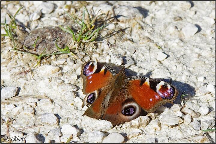 Sorties des premiers papillons