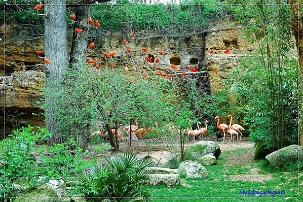 Zoo-Douai 0884
