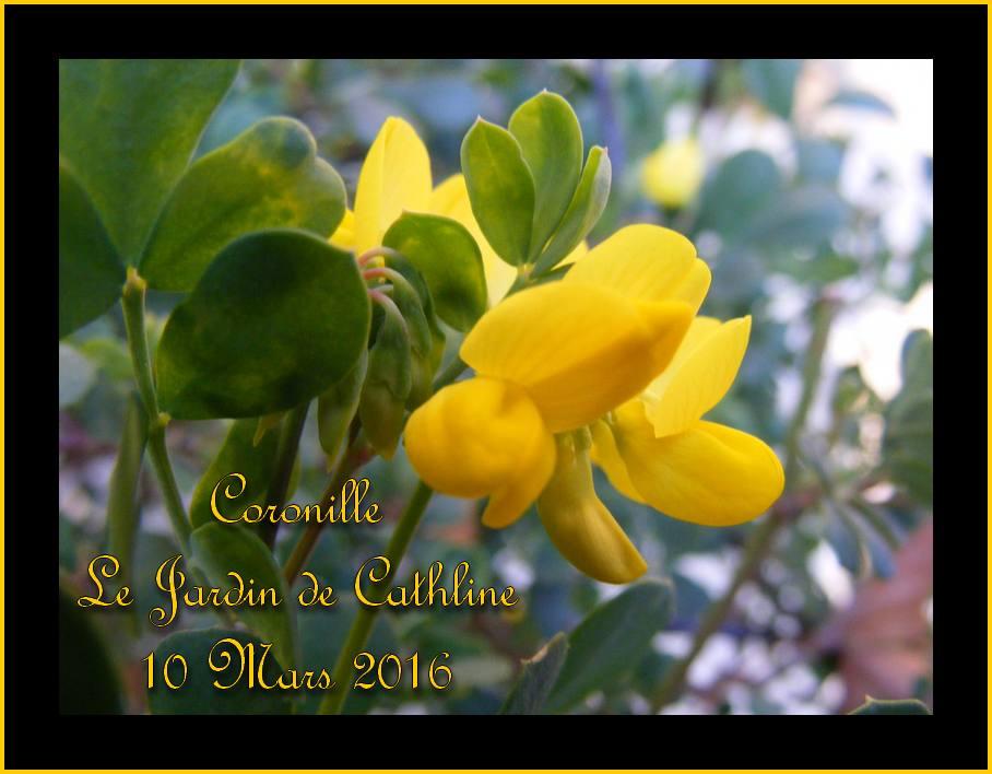 Jardiner avec la Lune du 11 au 20 Mars