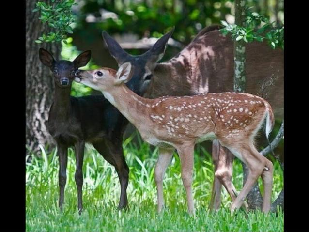 Nos amis les animaux