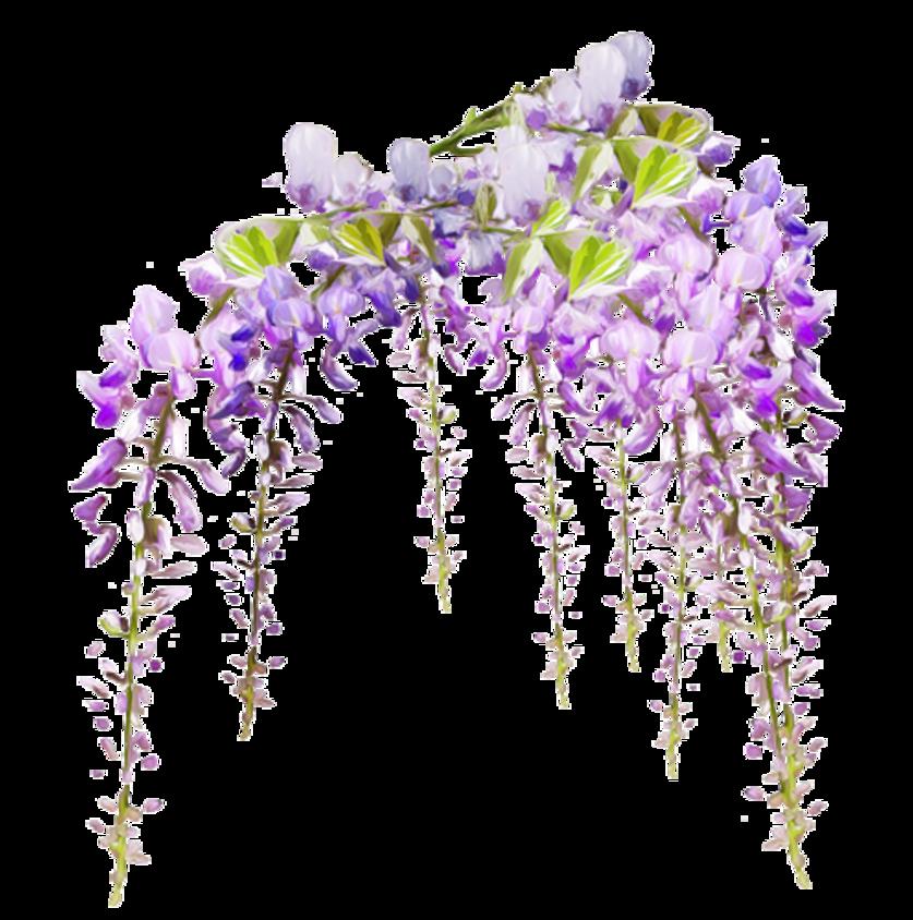 Superbe tunnel de fleurs