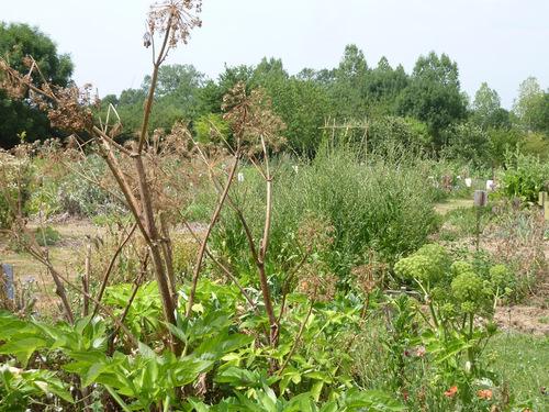 les jardins de la Chevérière souffrant de la sécheresse....
