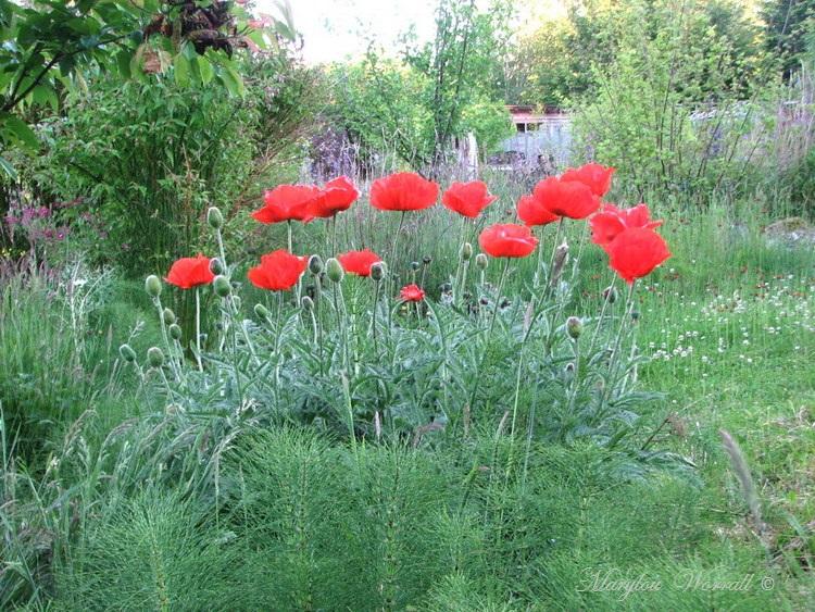 Nouvelles du Canada 155 : Un jardin extraordinaire