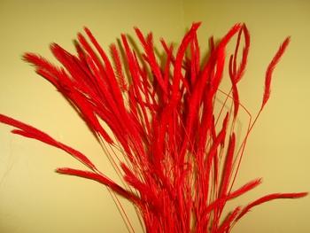 blé rouge
