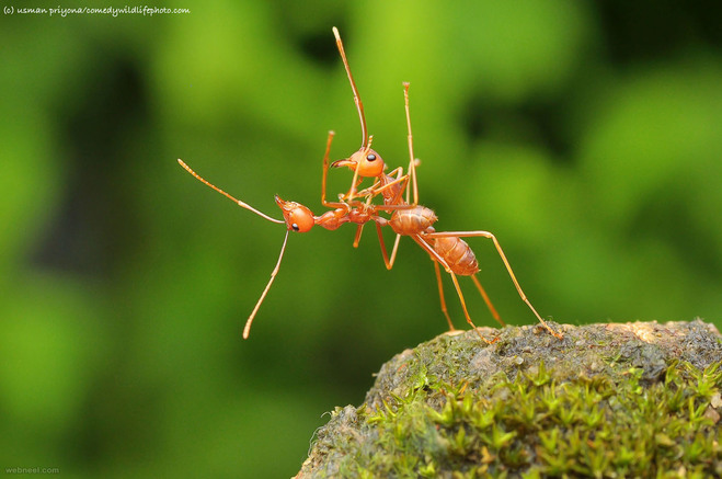 ant suicide comedy wildlife photography