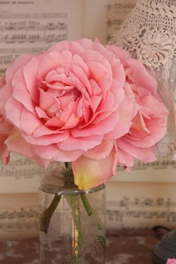 rose-romantique-04[1]