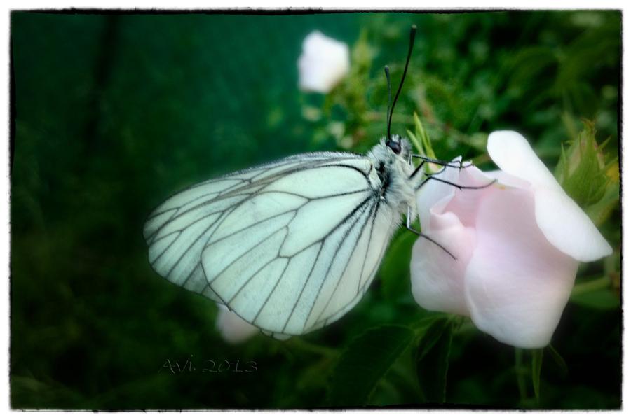 Le réveil du papillon