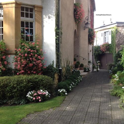 Le jardin d'Elisabeth..suite..